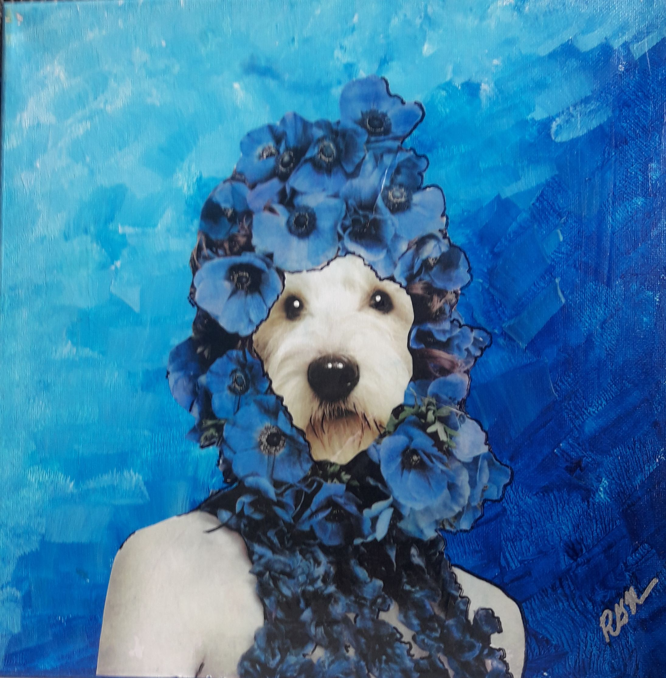 Blue Belle - golden doodle with blue flowers